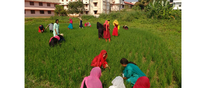 urvara2018-paddy cultivation